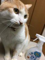 猫のマーキング臭にお困りではないですか?